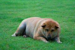 Tired ou deprimido Imagem de Stock