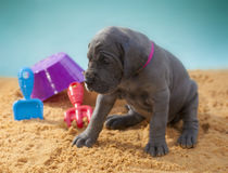 Tired puppy Royalty Free Stock Photography