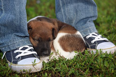 Tired puppy resting near the man`s feet. In the park on the gras Royalty Free Stock Photos