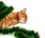 Tired red-headed kitten lying on its side in Christmas tinsel an Stock Images