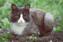 Sad cat. Tired and sad wild cat laying on the ground in the village garden royalty free stock photos