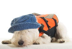Tired Sailor - dog with life jacket and hat Royalty Free Stock Images