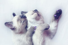 Tired Sisters. What's better the cuddly kittens? We say nothing Royalty Free Stock Photos