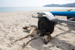 Tired stray dog. In sand on a beach Stock Photo