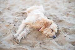 Tired stray dog. Stock Images