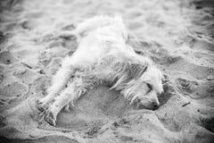 Tired stray dog. Stock Photos