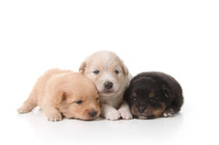 Tired Sweet and Cuddly Newborn Puppies Stock Photos