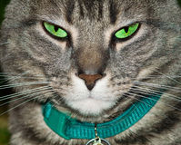Tired tabby cat. A tired looking grey tabby cat with intense green eyes Stock Image