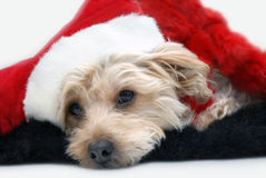 Tired of Waiting on Santa Royalty Free Stock Photo