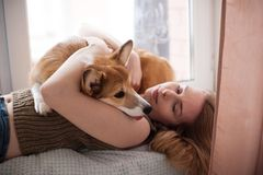 Tired Welsh corgi pembroke puppy lying on its owners hands. Happy cute dog. Tired Welsh corgi pembroke puppy lying on its owners hands. Smiling girl playing Royalty Free Stock Photo