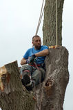 tired tree worker Stock Image