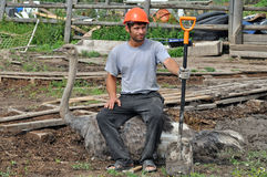 Tired Worker sits on ostrich Royalty Free Stock Image