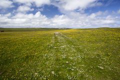 Tiree Machair in Flower Stock Image