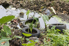 Tires abandoned Royalty Free Stock Images