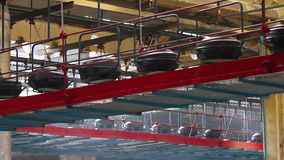 Tires on the conveyor in the tire pressing shop. stock video footage