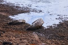 Tires in the mud on the shore royalty free stock image