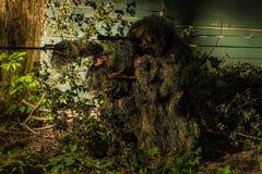 Tireur isolé dans le costume de ghillie Image libre de droits