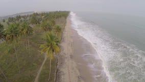 Tiri in Africa e le palme e gli alberi archivi video