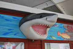 Tiri bianco in secco di Florida della statua dello squalo della costa di golfo il grande Fotografia Stock Libera da Diritti