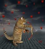 Tiri del gatto con una freccia 2 immagine stock