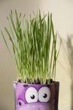 Tiri di verde di erba Immagini Stock
