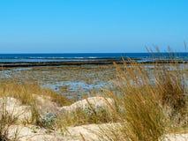 Tiri la riva in secco con la duna, la vegetazione e l'orizzonte blu Fotografie Stock