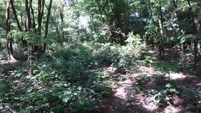 Tiro aéreo - canal que vuela un bosque - cámara lenta posterior almacen de video