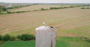 Tiro aéreo: Cegonha no ninho na torre de água na vila video estoque