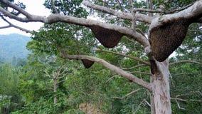 Tiro aéreo de avisperos en el árbol grande con el abejón atacado por las avispas almacen de metraje de vídeo