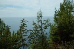 Tiro aéreo de Forest River Surrounded grande por los árboles de pino Imagen de archivo