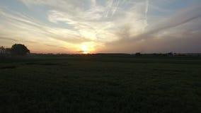 Tiro aéreo de la cámara que inclina para arriba hacia puesta del sol hermosa sobre los campos de trigo Vuelo bajo sobre el campo  almacen de video