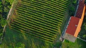 Tiro aéreo de la subida del viñedo Imagen de archivo libre de regalías
