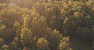 Tiro aéreo de los árboles del otoño en bosque Foto de archivo