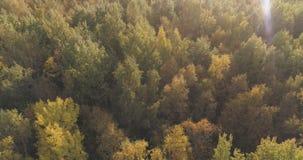 Tiro aéreo de los árboles del otoño en bosque Imagen de archivo libre de regalías