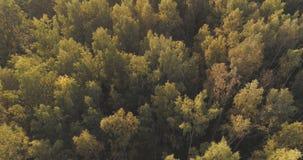 Tiro aéreo de los árboles del otoño en bosque Fotos de archivo libres de regalías
