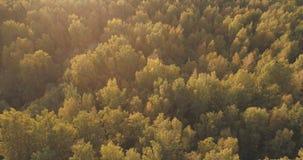 Tiro aéreo de los árboles del otoño en bosque Fotografía de archivo libre de regalías