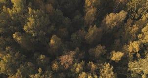 Tiro aéreo de los árboles del otoño en bosque Fotos de archivo
