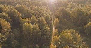 Tiro aéreo de los árboles del otoño en bosque Imágenes de archivo libres de regalías