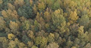 Tiro aéreo de los árboles del otoño en bosque en octubre Foto de archivo libre de regalías