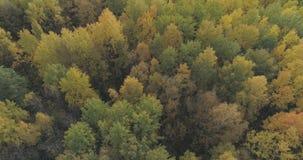 Tiro aéreo de los árboles del otoño en bosque en octubre Foto de archivo