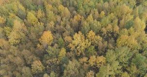 Tiro aéreo de los árboles del otoño en bosque en octubre Fotografía de archivo
