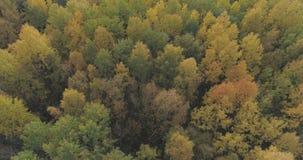 Tiro aéreo de los árboles del otoño en bosque en octubre Imagen de archivo