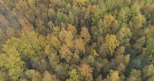 Tiro aéreo de los árboles del otoño en bosque en octubre Imagen de archivo libre de regalías
