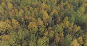 Tiro aéreo de los árboles del otoño en bosque en octubre Imagenes de archivo