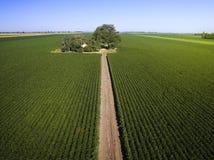 Tiro aéreo de los campos agrícolas de la soja Imagen de archivo
