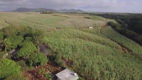 Tiro aéreo de los campos de la caña de azúcar en Mauricio almacen de metraje de vídeo