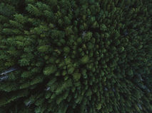Tiro aéreo de los tops del árbol Fotos de archivo libres de regalías