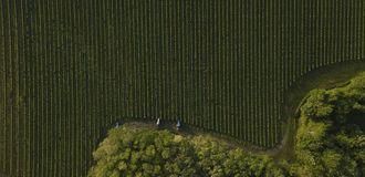 Tiro aéreo de los tractores de un árbol que trabajan en el viñedo, Burdeos imágenes de archivo libres de regalías