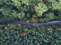 Tiro aéreo de uma estrada fina curvy que atravessa uma floresta grossa foto de stock royalty free