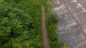 Tiro aéreo de un niño pequeño que corre en el territorio de una 1ra fortaleza vieja de la guerra mundial durante la puesta del so almacen de video